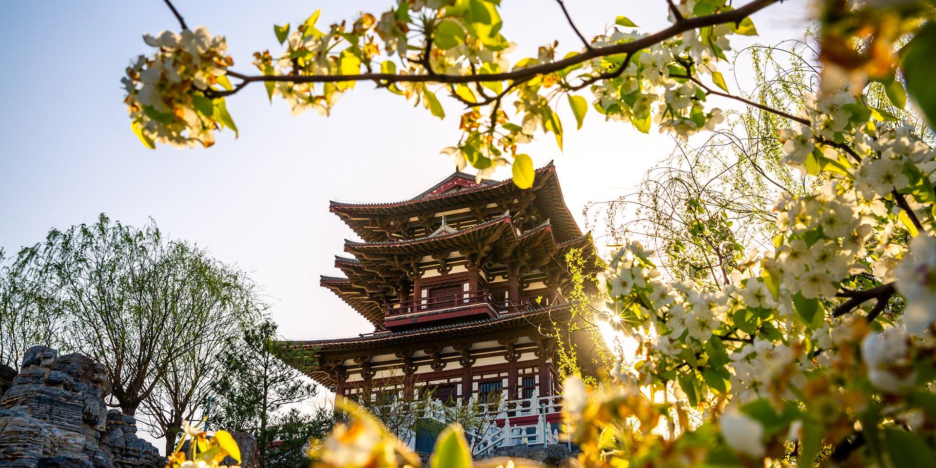 teach English in Tangshan