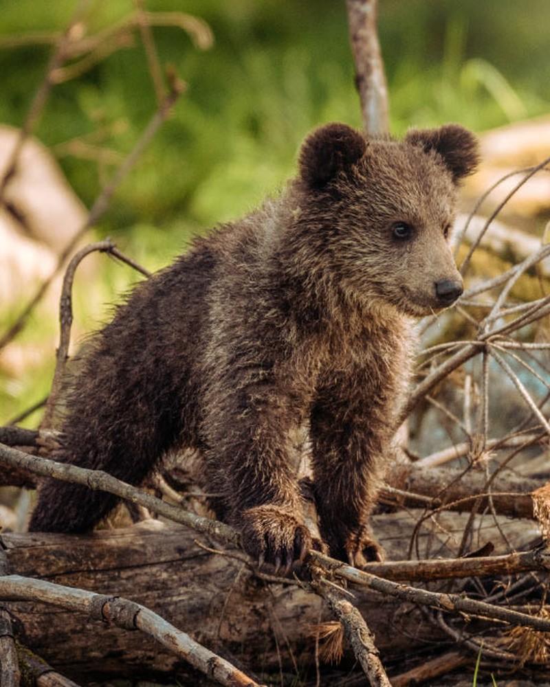 Flashcards Nama Binatang di Hutan dalam Bahasa Inggris ...